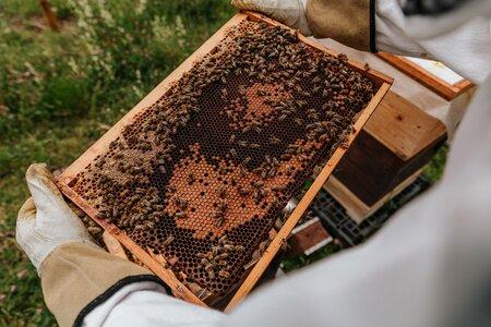 Přednáška - Jak se stát včelařem