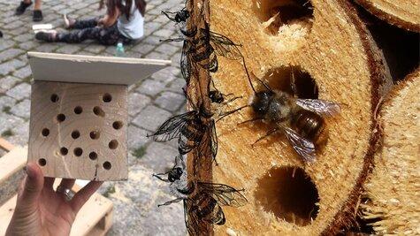 Workshop - Kde bydlí včelky samotářky?