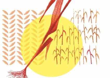 Literatura - Revoluce jednoho stébla trávy